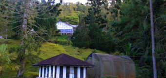 Bukit Larut (Maxwell Hill) Pictures
