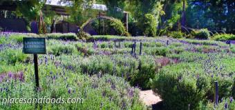 Ashcombe Maze and Lavender Garden Victoria