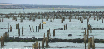 Visiting Oyster Farms in Coffin Bay