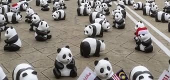 1600 Panda Invasion in Malaysia