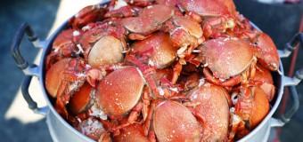 Spanner Crabs in Phuket