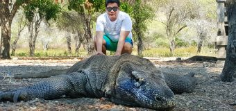 10 Things You Should Know About Komodo Dragon
