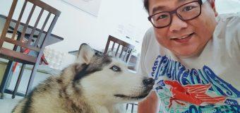 Bark & Bites Husky Bistro Subang Jaya