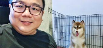 Huskiss Café Kuala Lumpur's First Huskies Café
