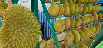 The Truth about Musang King Durian Rejected by China