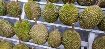 Eat Durian Treats for FREE at Durian King TTDI on 20th November 2017